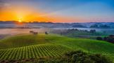 贵州湄潭茶文化的历史地位及其价值