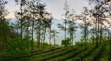 2021年云南茶产业绿色发展政策支持资金开始申报