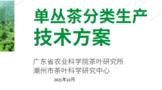 潮州市发布《单丛茶分类生产技术方案》