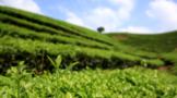 中国茶叶地图:全国茶到底有多少种?附几条茶叶冷知识