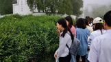 """""""前岗辉白""""茶文化旅游景区入选首批绍兴市非遗研学游基地"""