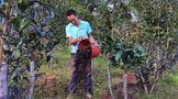 云南镇沅:努力实现茶产业高质量发展